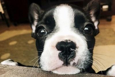 Ansiedade canina: saiba como o distúrbio afeta a saúde dos pets