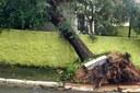 Moradores de São Bernardo reclamam de danos causados por árvores caídas