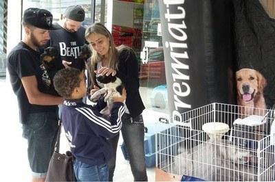 Pet shops de São Bernardo ajudam em adoção