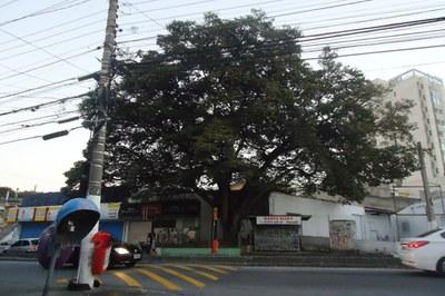 Rudge Ramos tem duas das oito áreas verdes tombadas por São Bernardo