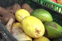 Produção de alimentos orgânicos no Brasil cresce cerca de 30% ao ano