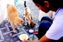 Pets ganham alimentação balanceada