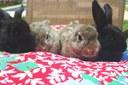 Abandono de coelhos aumenta durante a época da Páscoa