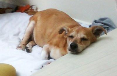 Cães na terceira idade precisam de cuidados especiais